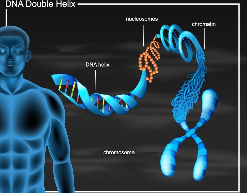 تركيب الحمض النووي