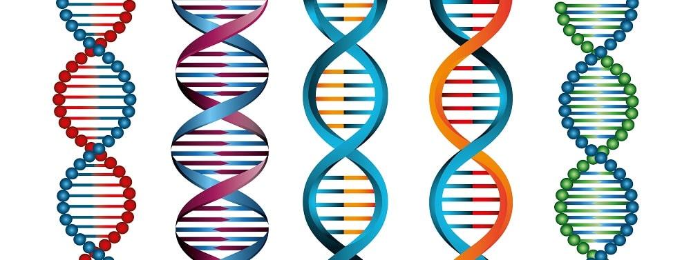 شكل الحمض النووي