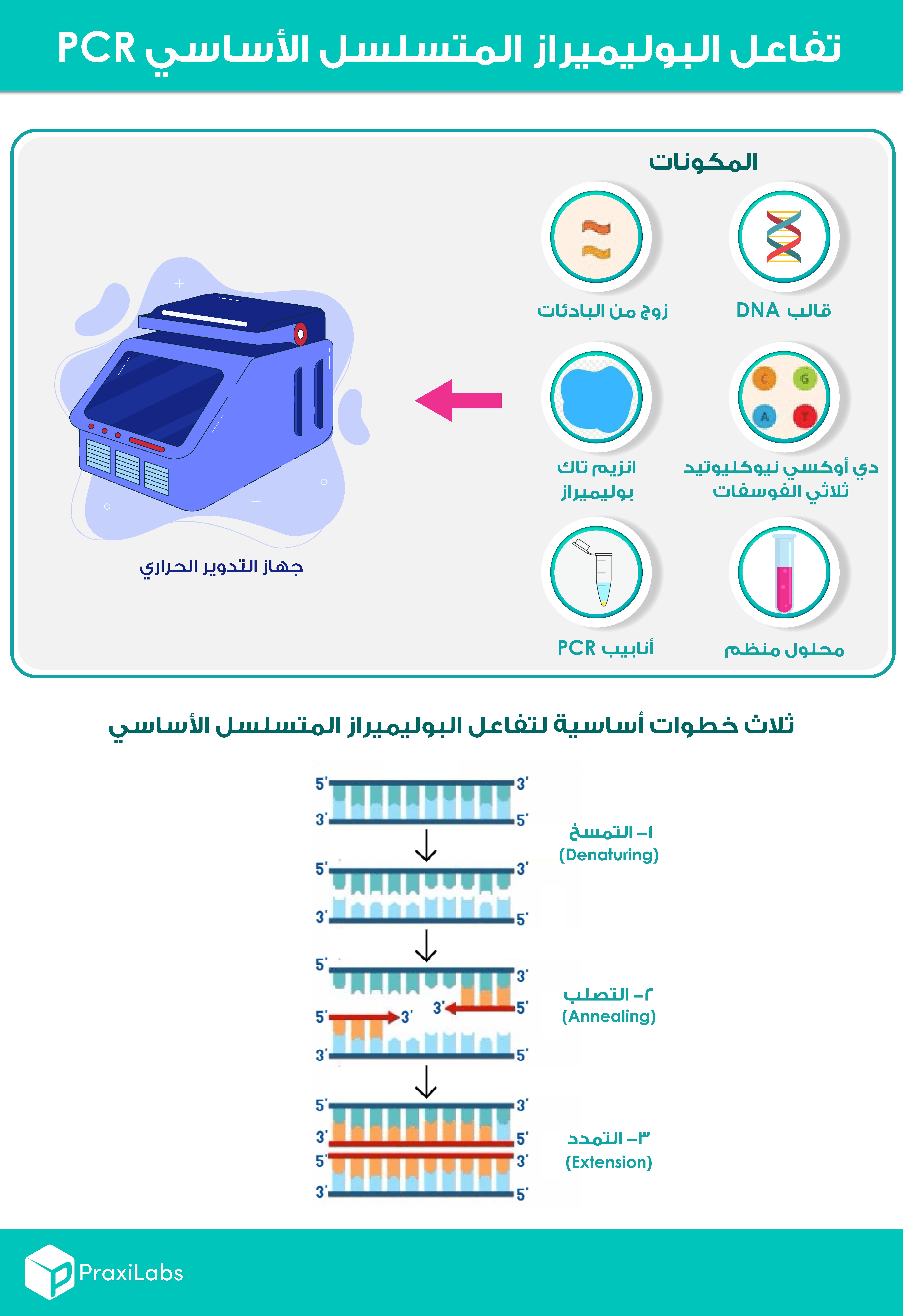 مكونات وخطوات تفاعل البوليميراز المتسلسل